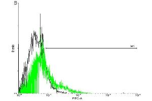 Image no. 2 for anti-G Protein-Coupled Receptor 77 (GPR77) (AA 1-337) antibody (ABIN525897)