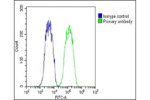 Flow Cytometry (FACS) image for anti-Wingless-Type MMTV Integration Site Family, Member 5A (WNT5A) (AA 185-213), (Center) antibody (ABIN651869)