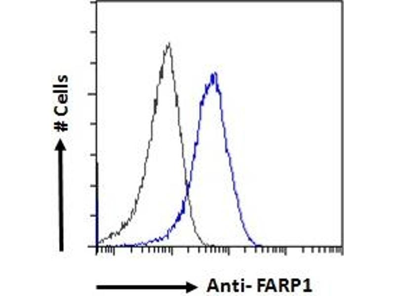 Image no. 3 for anti-FERM, RhoGEF (ARHGEF) and Pleckstrin Domain Protein 1 (Chondrocyte-Derived) (FARP1) (N-Term) antibody (ABIN185104)