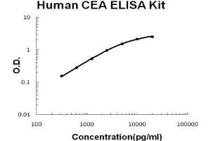 Image no. 1 for Carcinoembryonic Antigen-Related Cell Adhesion Molecule 5 (CEACAM5) ELISA Kit (ABIN921121)