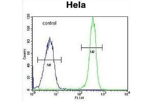Image no. 1 for anti-Collagen, Type IV, alpha 2 (COL4A2) (AA 163-194), (Chain alpha 2), (N-Term) antibody (ABIN951623)