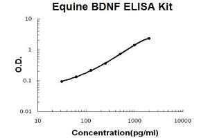 Image no. 1 for Brain-Derived Neurotrophic Factor (BDNF) ELISA Kit (ABIN5510519)