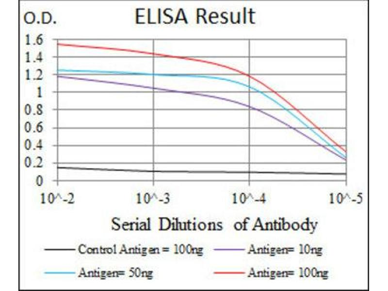 ELISA image for anti-Cyclin-Dependent Kinase 2 (CDK2) antibody (ABIN1845617)