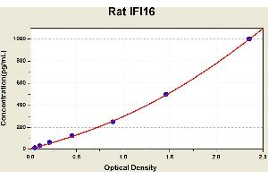 Image no. 1 for Interferon, gamma-Inducible Protein 16 (IFI16) ELISA Kit (ABIN1115586)