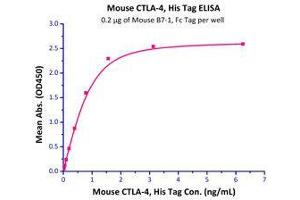 Image no. 3 for Cytotoxic T-Lymphocyte-Associated Protein 4 (CTLA4) (AA 36-162) (Active) protein (His tag) (ABIN2870729)