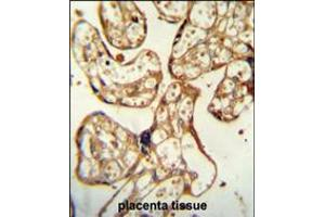 Image no. 2 for anti-Pregnancy Specific beta-1-Glycoprotein 9 (PSG9) (AA 108-137) antibody (ABIN5535658)