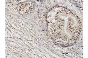 Image no. 3 for anti-Zinc Finger Protein 92 (ZNF92) (AA 490-586) antibody (ABIN566910)