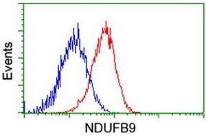 Image no. 6 for anti-NADH Dehydrogenase (Ubiquinone) 1 beta Subcomplex, 9, 22kDa (NDUFB9) (AA 3-179) antibody (ABIN1491359)