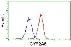 Image no. 10 for anti-Cytochrome P450, Family 2, Subfamily A, Polypeptide 6 (CYP2A6) antibody (ABIN1497724)
