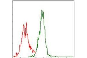 Flow Cytometry (FACS) image for anti-Argininosuccinate Synthase 1 (ASS1) antibody (ABIN969502)