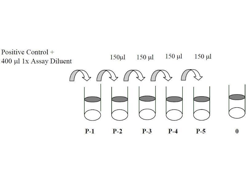 V-Erb-B2 Erythroblastic Leukemia Viral Oncogene Homolog 3 (Avian) (ERBB3) ELISA Kit