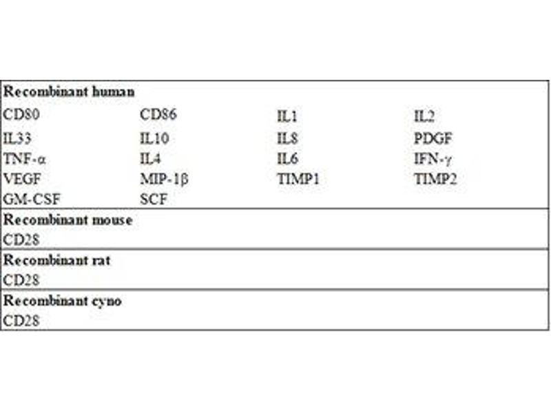 CD28 (CD28) ELISA Kit (2)