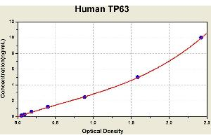 Image no. 1 for Tumor Protein P63 (TP63) ELISA Kit (ABIN1117680)
