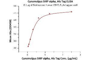 Image no. 2 for Signal-Regulatory Protein alpha (SIRPA) (AA 31-370) (Active) protein (His tag) (ABIN6253574)