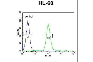 Image no. 3 for anti-Coenzyme Q Biosynthesis Protein 7 (Coq7) (AA 162-191), (C-Term) antibody (ABIN5532894)