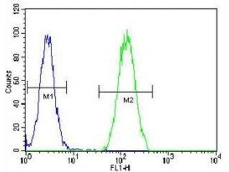 Flow Cytometry (FACS) image for anti-Bone Morphogenetic Protein 2 (BMP2) (AA 260-289) antibody (ABIN3028512)