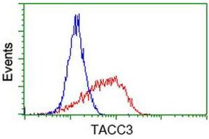 Image no. 4 for anti-Transforming, Acidic Coiled-Coil Containing Protein 3 (TACC3) antibody (ABIN1498100)