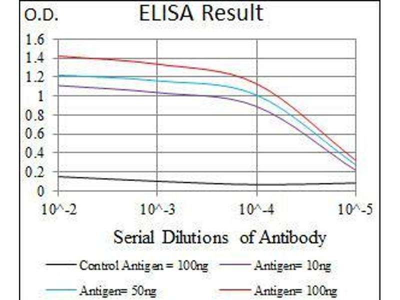 ELISA image for anti-T Antigen (AA 257-309) antibody (ABIN1098136)