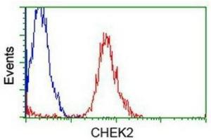 Flow Cytometry (FACS) image for anti-Checkpoint Kinase 2 (CHEK2) (Transcript Variant 1) antibody (ABIN4297968)
