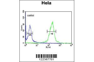 Flow Cytometry (FACS) image for anti-CLIP1 antibody (CAP-GLY Domain Containing Linker Protein 1) (ABIN2158278)