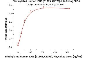 Image no. 1 for Inducible T-Cell Co-Stimulator (ICOS) (AA 21-141) (Active) protein (His tag,AVI tag,Biotin) (ABIN6731299)