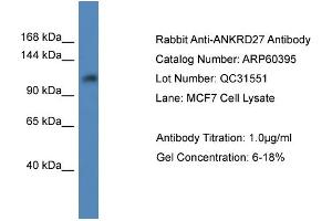 Image no. 1 for anti-Ankyrin Repeat Domain 27 (VPS9 Domain) (ANKRD27) (C-Term) antibody (ABIN2788435)