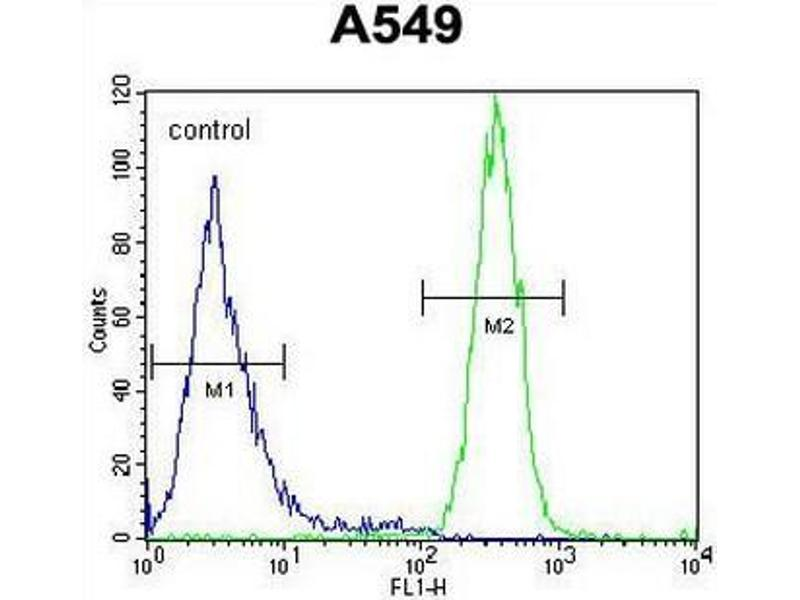 Flow Cytometry (FACS) image for anti-SYNCI (AA 133-163), (N-Term) antibody (ABIN955027)