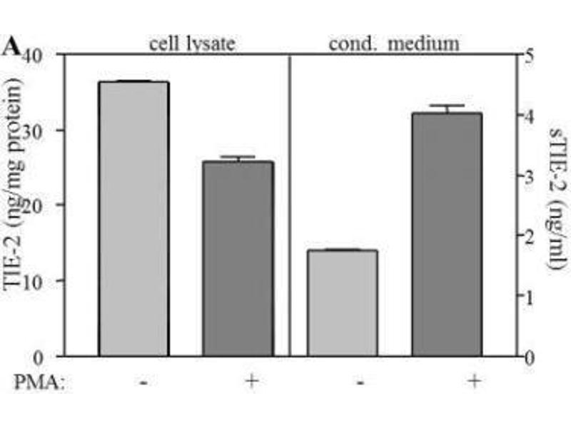 ELISA image for anti-TEK antibody (TEK Tyrosine Kinase, Endothelial) (ABIN449628)
