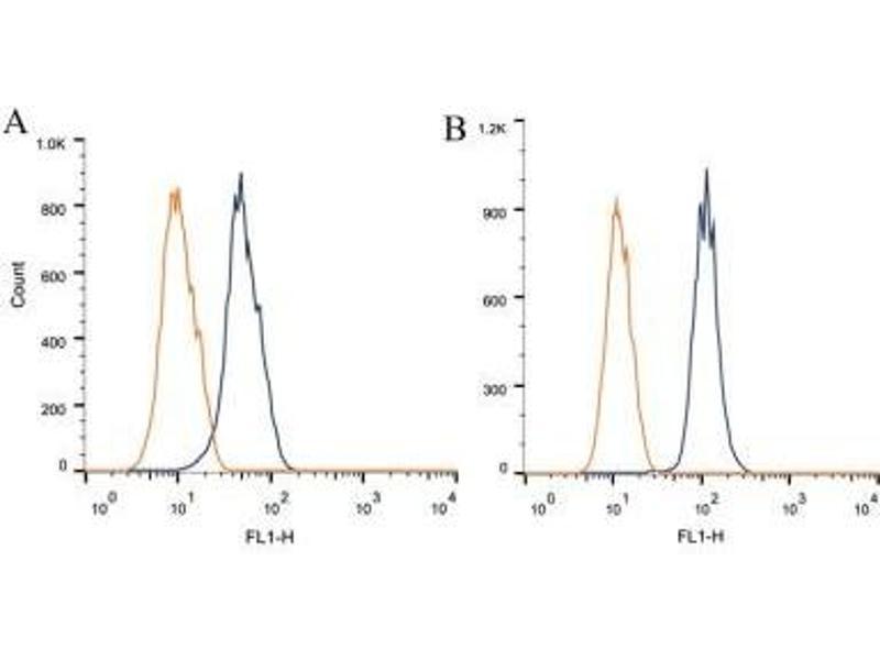 Flow Cytometry (FACS) image for anti-Nucleus Accumbens Associated 1, BEN and BTB (POZ) Domain Containing (NACC1) antibody (ABIN259549)