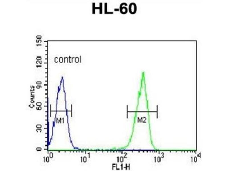 Image no. 3 for anti-Keratin 9 (KRT9) antibody (ABIN3003130)