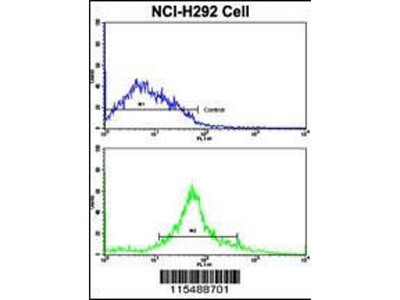 Flow Cytometry (FACS) image for anti-CDK3 antibody (Cyclin-Dependent Kinase 3) (AA 4-38) (ABIN391749)
