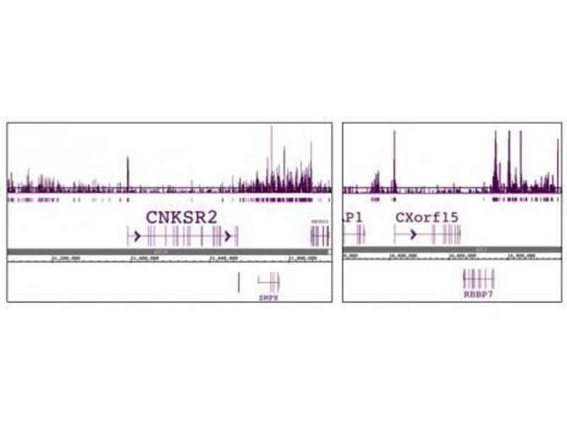 ChIP DNA-Sequencing (ChIPSeq) image for anti-H2A Histone Family, Member Z (H2AFZ) (C-Term) antibody (ABIN4889649)