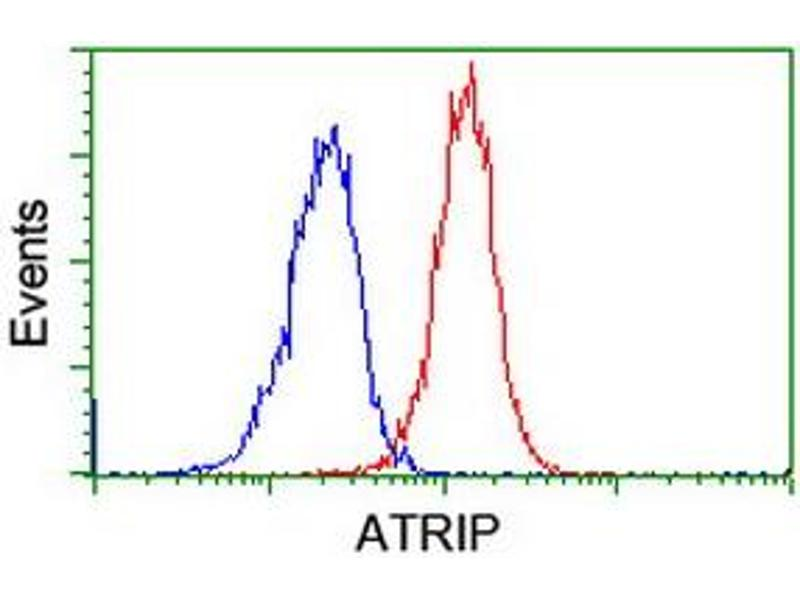 image for anti-ATR Interacting Protein (ATRIP) (AA 42-309) antibody (ABIN1491507)