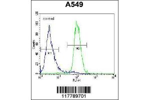 Flow Cytometry (FACS) image for anti-Angiopoietin 2 antibody (ANGPT2) (AA 404-432) (ABIN654062)