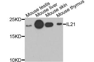 Western Blotting (WB) image for anti-Interleukin 21 (IL21) antibody (ABIN2970690)