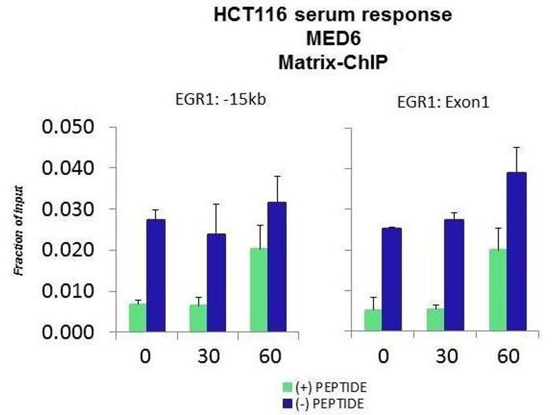 Chromatin Immunoprecipitation (ChIP) image for anti-Mediator Complex Subunit 6 (MED6) (Middle Region) antibody (ABIN2778335)