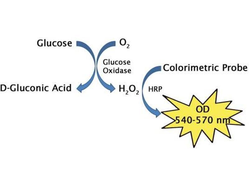 image for Glucose Assay Kit (Colorimetric) (ABIN5067615)