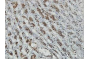 Image no. 2 for anti-RAS and EF Hand Domain Containing (RASEF) (AA 631-740) antibody (ABIN599333)