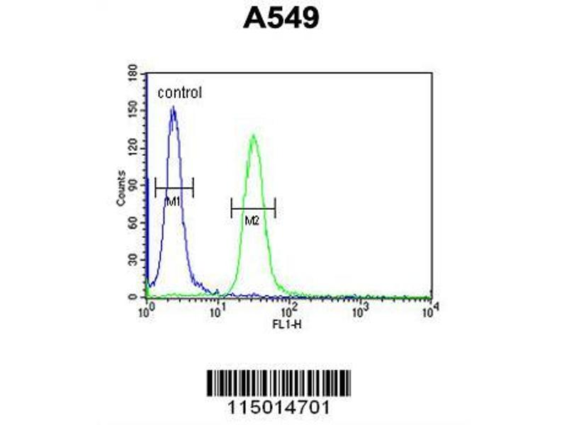 Flow Cytometry (FACS) image for anti-Budding Uninhibited By Benzimidazoles 1 Homolog (Yeast) (BUB1) (AA 1-30), (N-Term) antibody (ABIN651630)