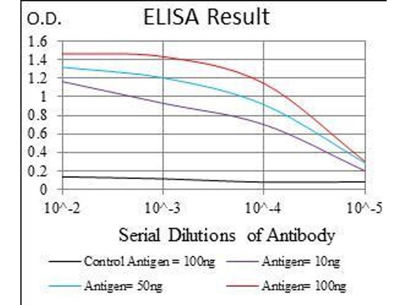 Image no. 1 for anti-Decorin (DCN) (AA 263-324) antibody (ABIN1724878)