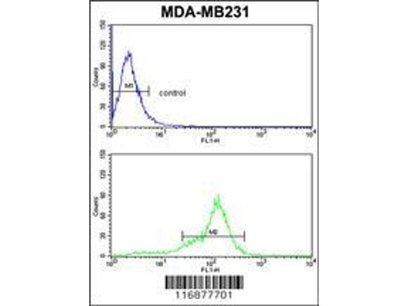 Flow Cytometry (FACS) image for anti-BCL2-Related Protein A1 (BCL2A1) (AA 53-81), (Center) antibody (ABIN650621)