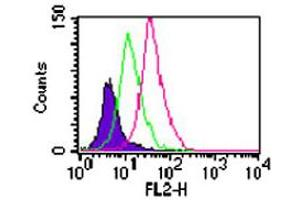 Image no. 2 for anti-Toll-Like Receptor 11 (Tlr11) antibody (ABIN537382)