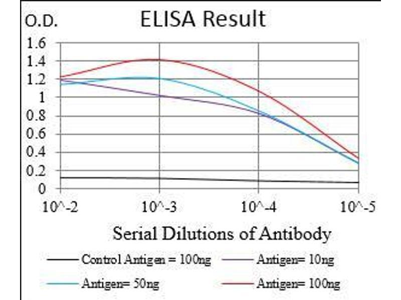 Image no. 1 for anti-serpin Peptidase Inhibitor, Clade A (Alpha-1 Antiproteinase, Antitrypsin), Member 7 (SERPINA7) (AA 168-302) antibody (ABIN1724893)