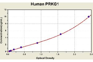 Image no. 1 for Protein Kinase, CGMP-Dependent, Type I (PRKG1) ELISA Kit (ABIN1116812)