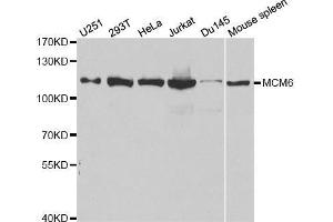 Western Blotting (WB) image for anti-Minichromosome Maintenance Complex Component 6 (MCM6) antibody (ABIN3022687)