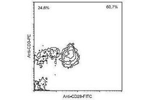 Flow Cytometry (FACS) image for anti-CD28 antibody (CD28)  (FITC) (ABIN440250)