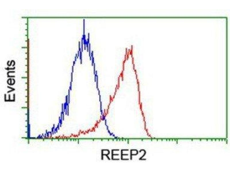 Flow Cytometry (FACS) image for anti-REEP2 抗体 (Receptor Accessory Protein 2) (ABIN4349808)
