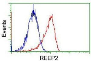 Flow Cytometry (FACS) image for anti-Receptor Accessory Protein 2 (REEP2) antibody (ABIN4349808)