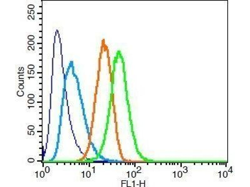 Flow Cytometry (FACS) image for anti-Signal Transducer and Activator of Transcription 3 (Acute-Phase Response Factor) (STAT3) (AA 260-310) antibody (ABIN738261)