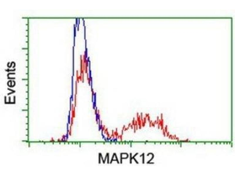 Flow Cytometry (FACS) image for anti-Mitogen-Activated Protein Kinase 12 (MAPK12) antibody (ABIN4342706)